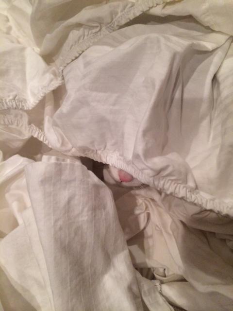 b sheets