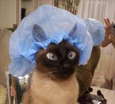 cat shower cap